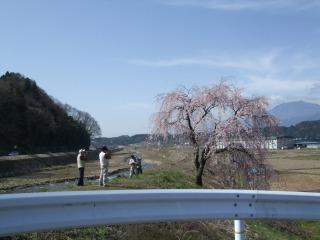 さくら・サクラ・桜_b0117564_2135821.jpg