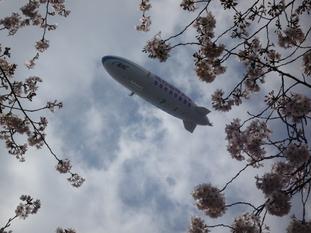 飛行船と桜_d0029066_9202442.jpg