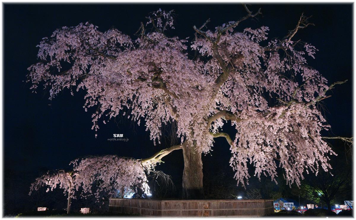 京都 円山公園 枝垂桜_f0021869_1045444.jpg