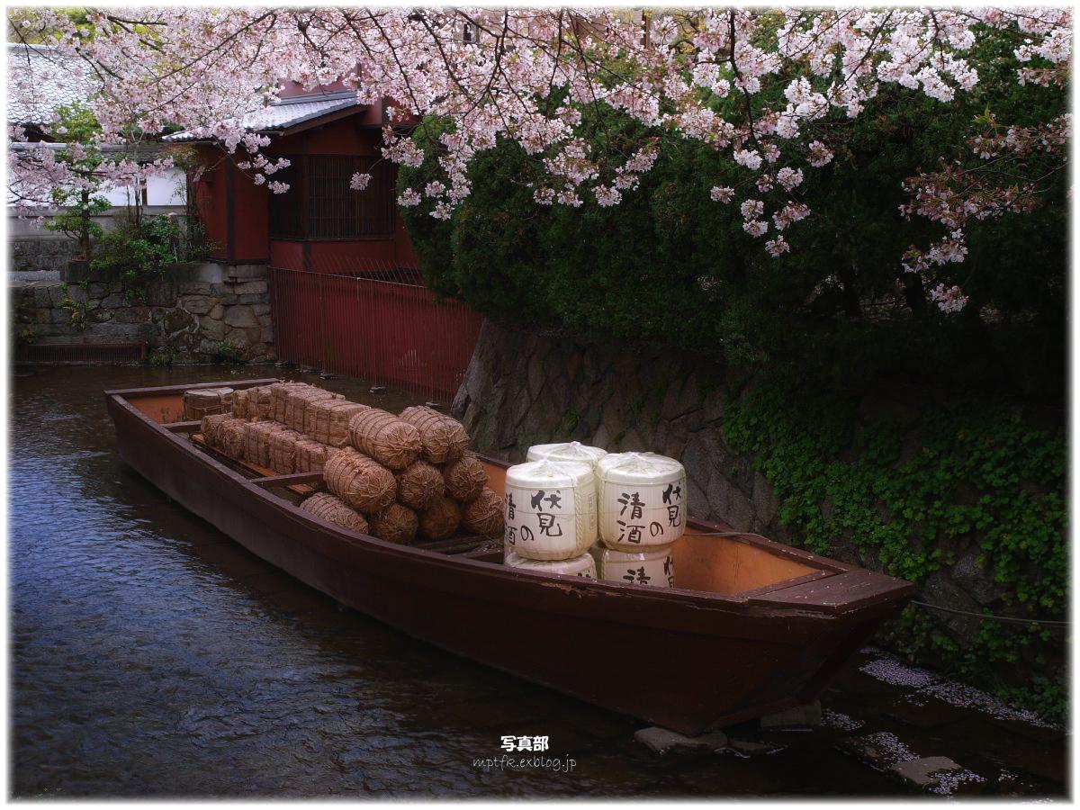 京都 高瀬舟と桜 _f0021869_2356947.jpg