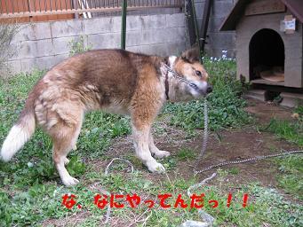 b0185771_0481038.jpg