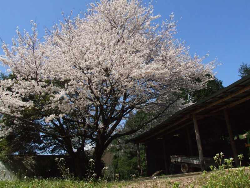 陽春の夢_b0188175_20201223.jpg