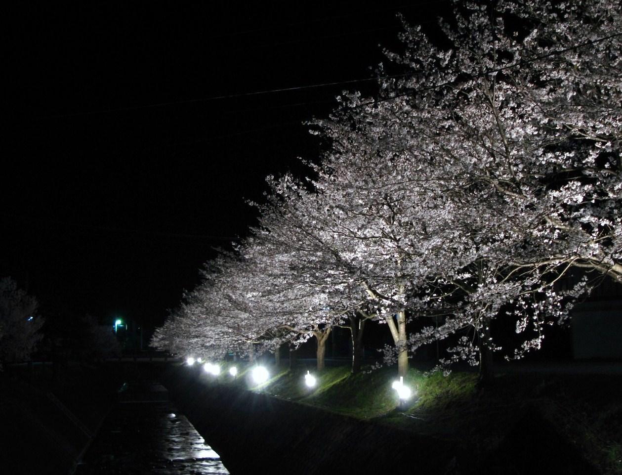 夜桜_d0047885_22165552.jpg
