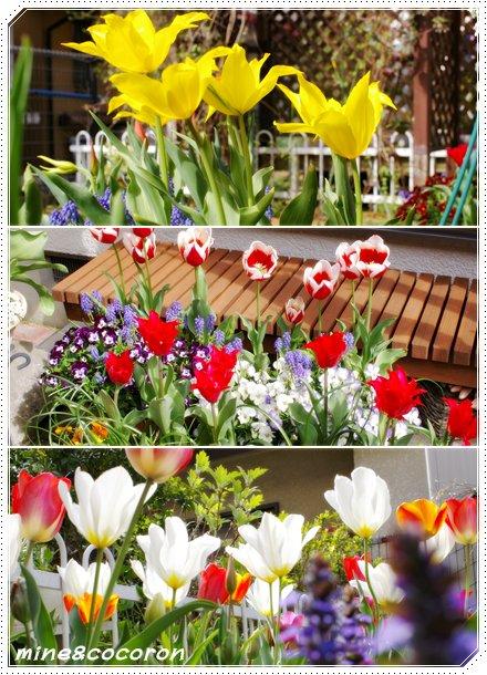 我家の春_a0053987_23114116.jpg