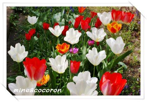我家の春_a0053987_23115776.jpg