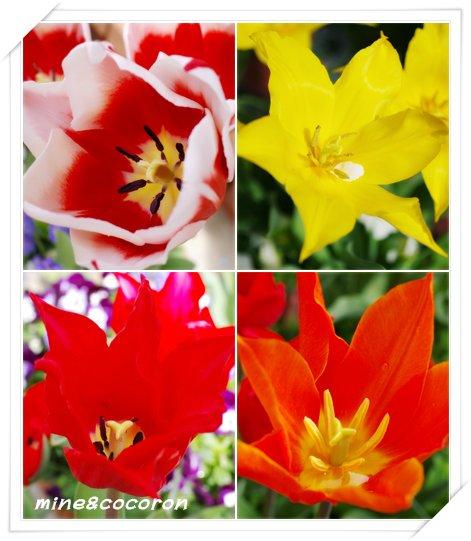 我家の春_a0053987_23121036.jpg