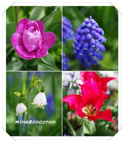 我家の春_a0053987_23122850.jpg