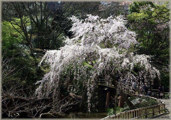 浜松城公園_b0093088_973857.jpg