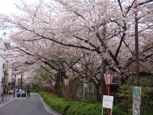 桜_f0201289_750556.jpg