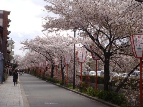 桜_f0201289_7512070.jpg