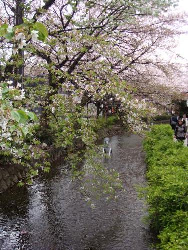 桜_f0201289_751811.jpg