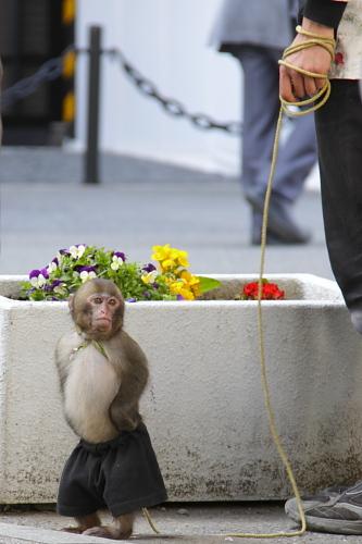 猿回しの子猿