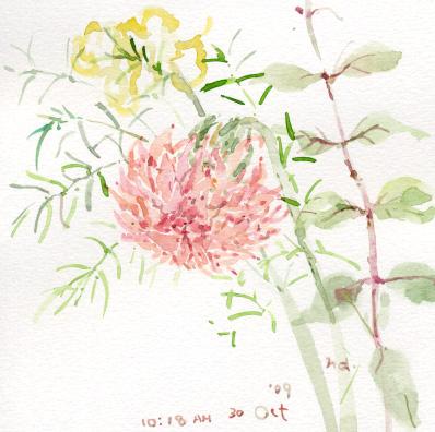 秋の花_d0115092_7275189.jpg