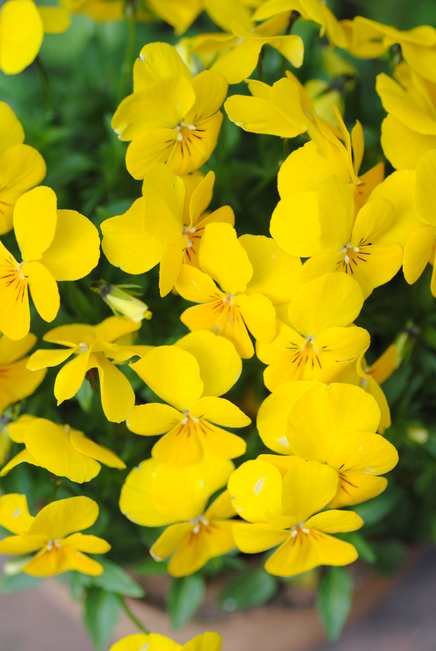 お花見 その後_c0195496_19441996.jpg