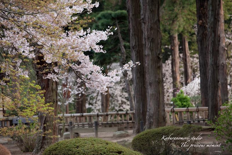 恵林寺の桜_c0137403_15451757.jpg
