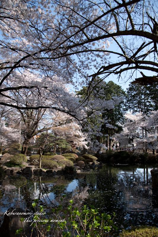 恵林寺の桜_c0137403_16322454.jpg