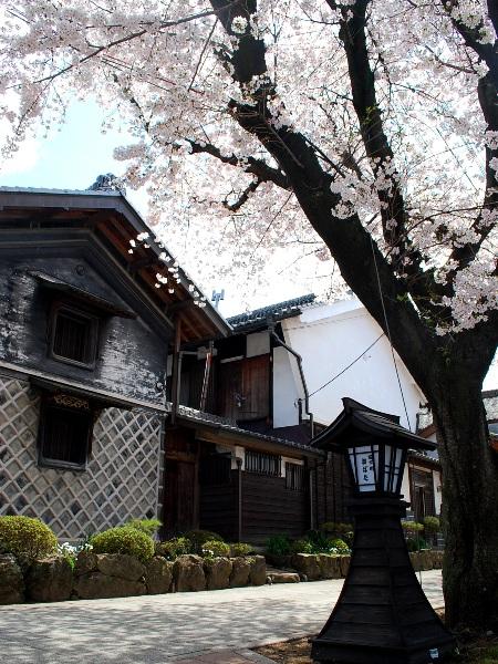 桜2010 城下町と桜_c0177814_16144014.jpg