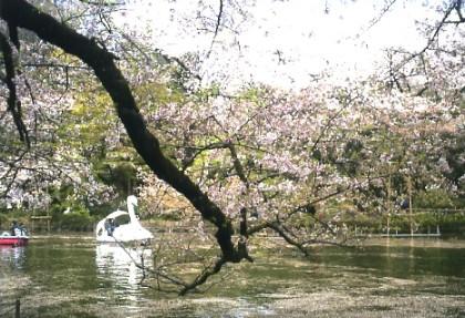 春の大北海道展/井の頭公園の桜_a0116217_16242642.jpg