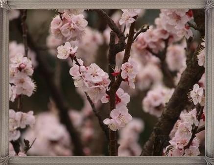 花の季節もきれいでした。