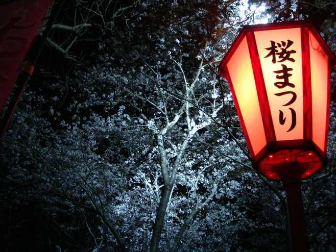 桜まつり 夜桜見物はいかが♪_f0229750_853742.jpg