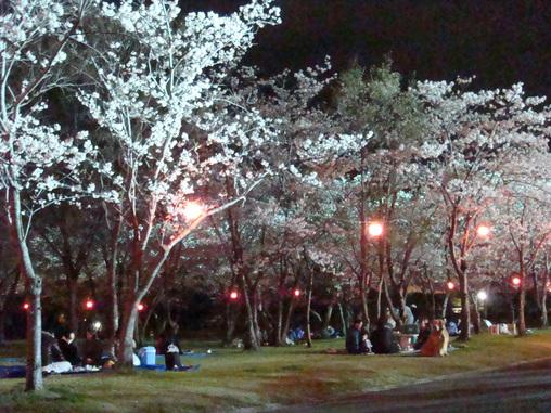 桜まつり 夜桜見物はいかが♪_f0229750_926973.jpg