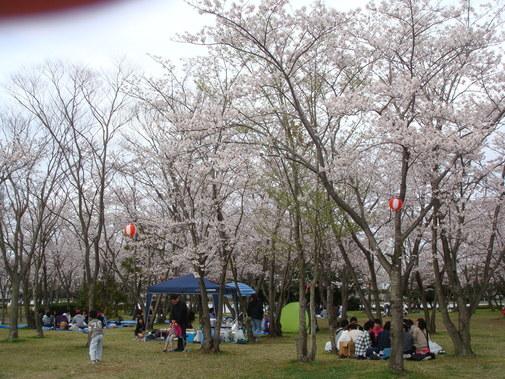 桜まつり 夜桜見物はいかが♪_f0229750_942353.jpg