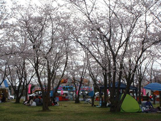 桜まつり 夜桜見物はいかが♪_f0229750_9431834.jpg