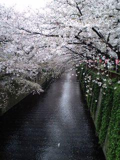 そろそろ桜も。_d0137764_1341999.jpg