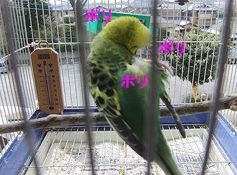 f0196665_08421.jpg