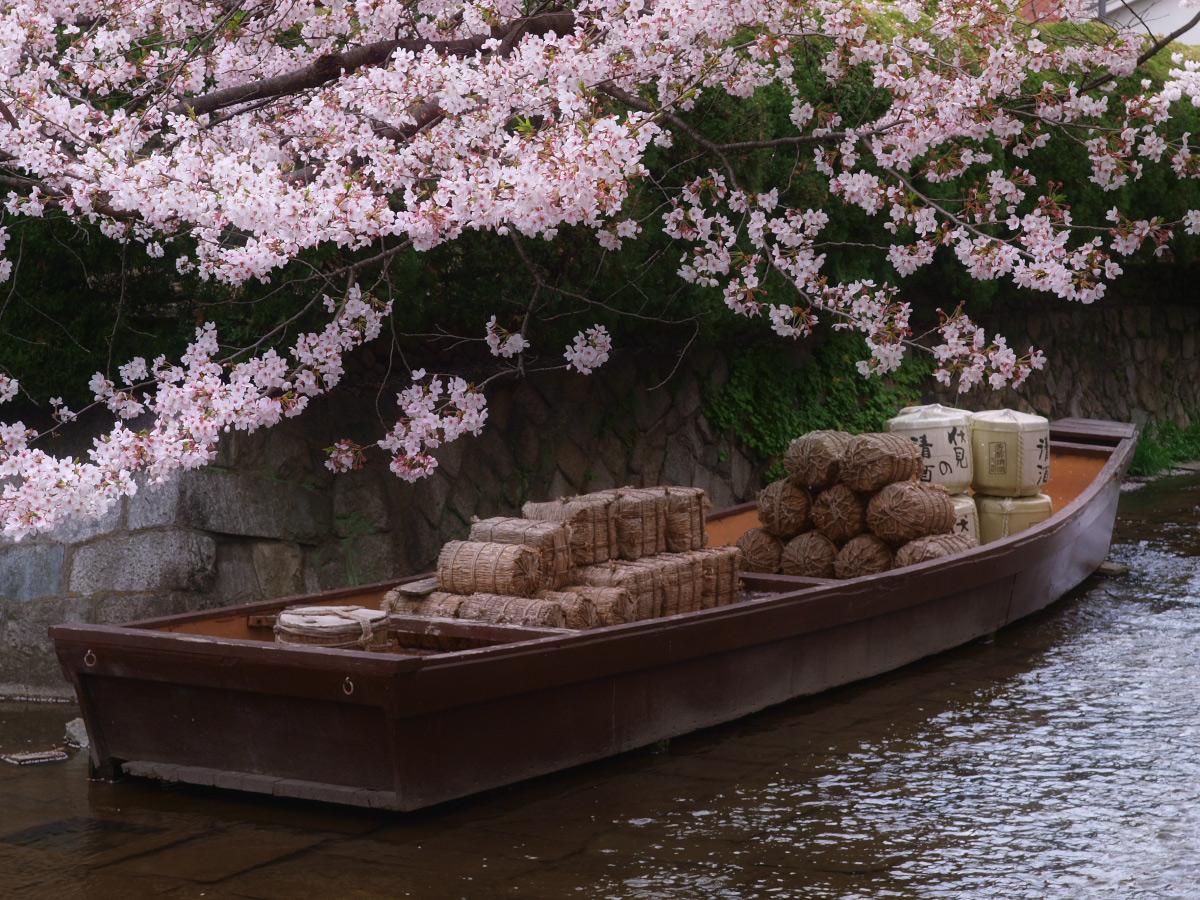 京都 高瀬舟と桜 _f0021869_021514.jpg