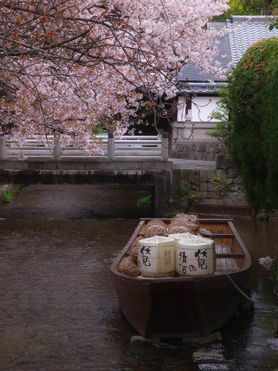 京都 高瀬舟と桜 _f0021869_031010.jpg