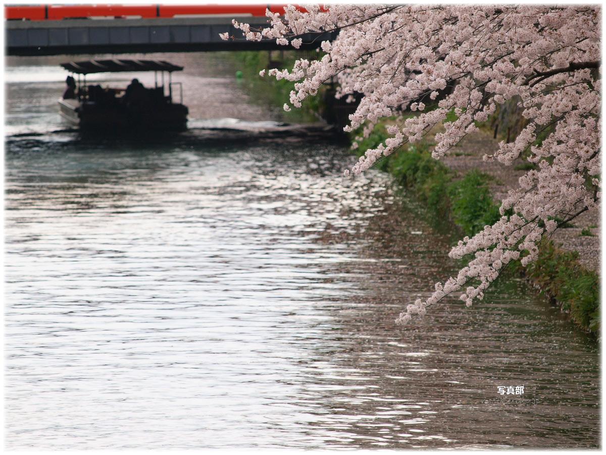 京都 岡崎疎水 桜_f0021869_19494868.jpg