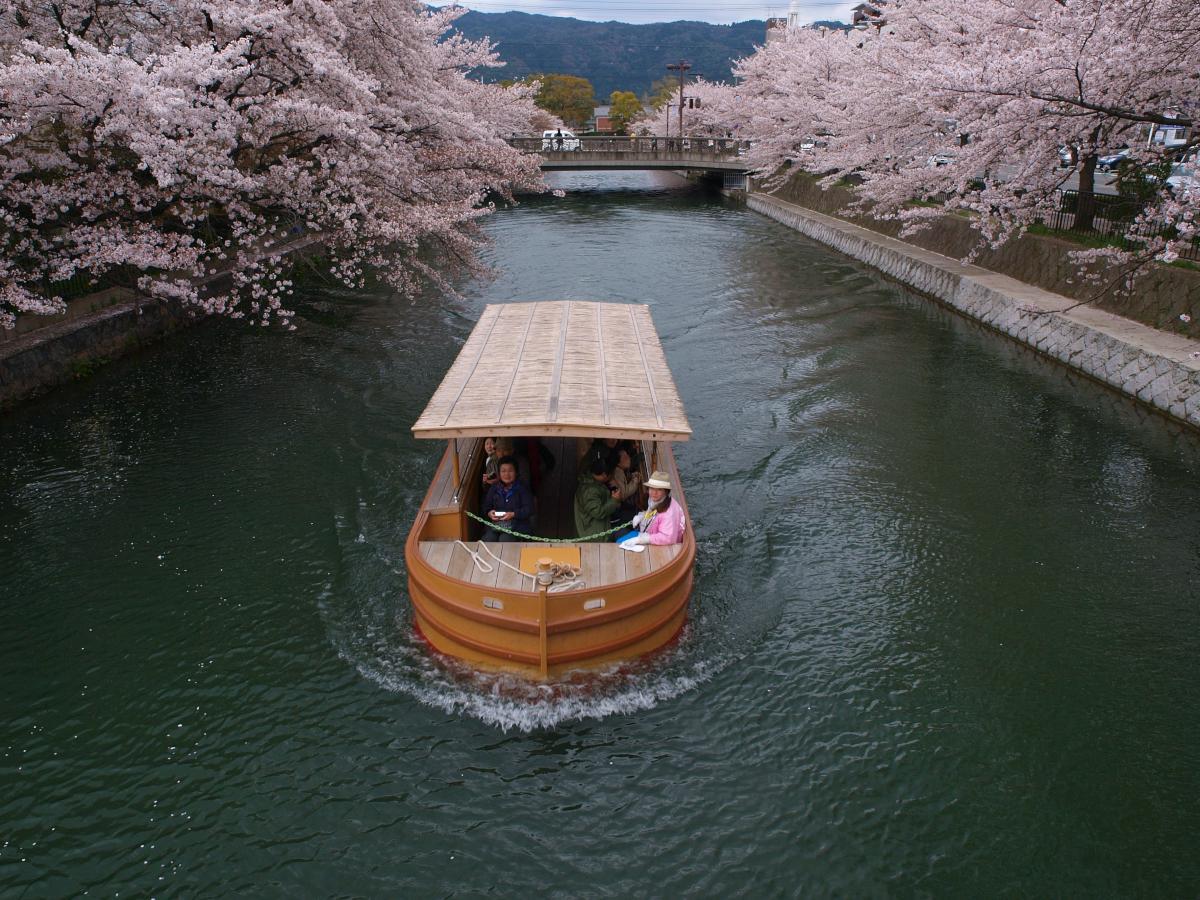 京都 岡崎疎水 桜_f0021869_1952797.jpg