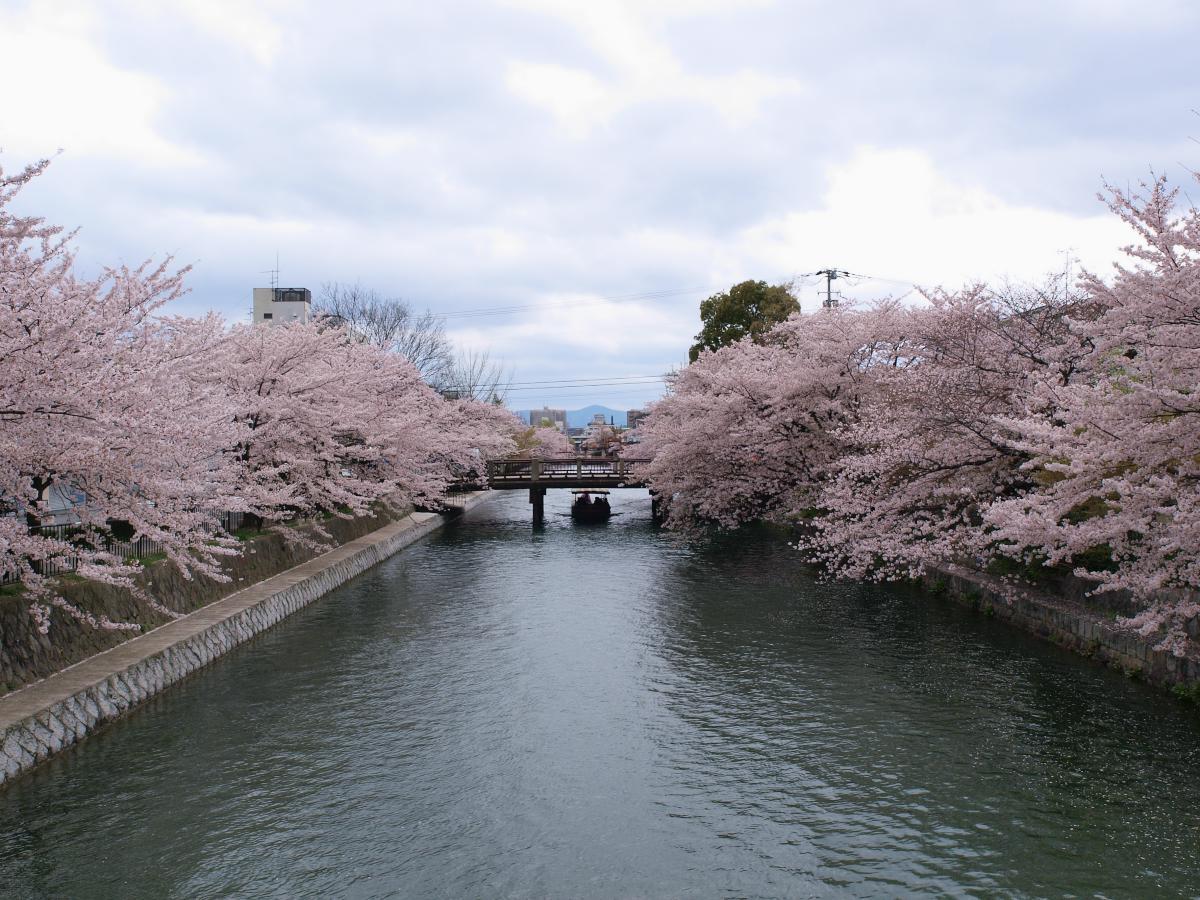 京都 岡崎疎水 桜_f0021869_19531260.jpg
