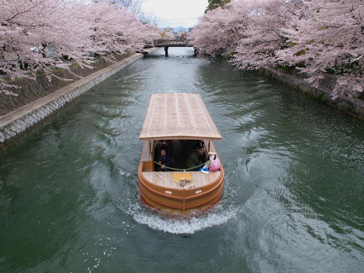 京都 岡崎疎水 桜_f0021869_19534130.jpg