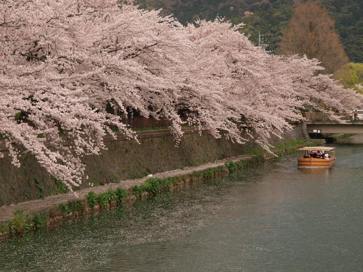 京都 岡崎疎水 桜_f0021869_1956138.jpg