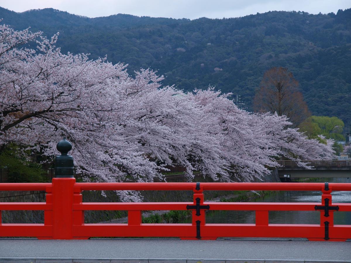 京都 岡崎疎水 桜_f0021869_2026346.jpg