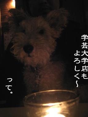 b0091373_325516.jpg