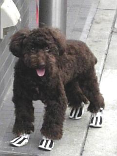 靴犬.jpg