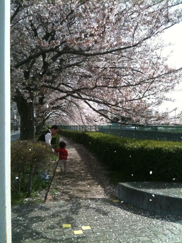 花見シーズンも終わるね_c0174484_146362.jpg