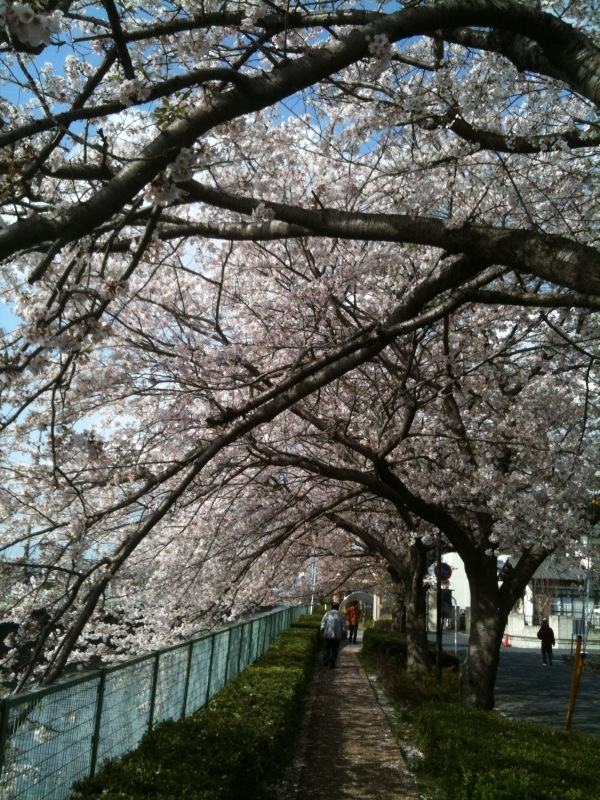花見シーズンも終わるね_c0174484_1465358.jpg