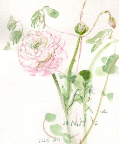 秋の花 2_d0115092_95392.jpg