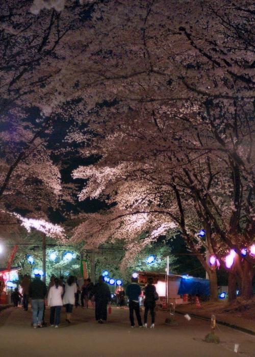 夜桜   〜宴〜_c0127403_1431171.jpg