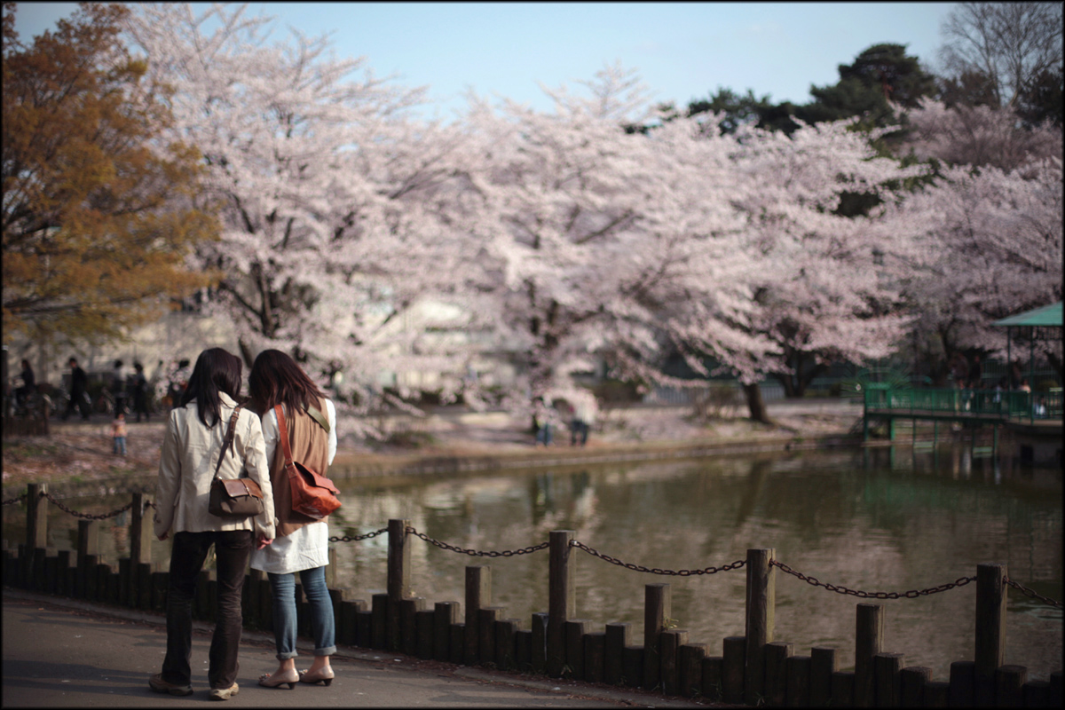 Sakura image 2010 #3_e0022810_22575290.jpg