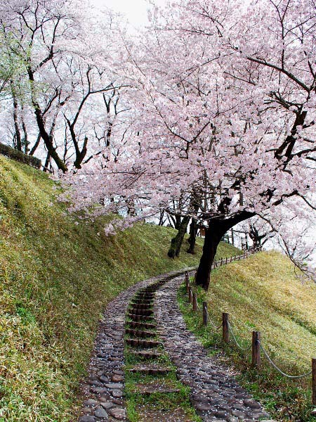 桜2010 城址の桜_c0177814_19415991.jpg