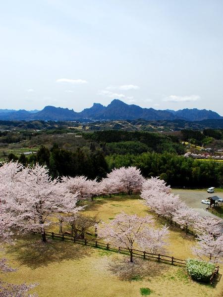 桜2010 城址の桜_c0177814_19481170.jpg