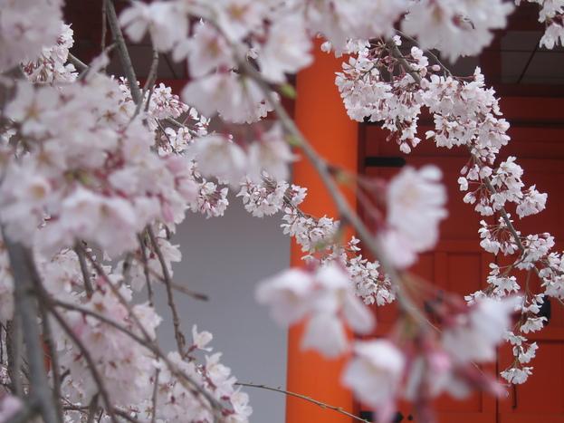 京都 一の傳_f0215714_731914.jpg
