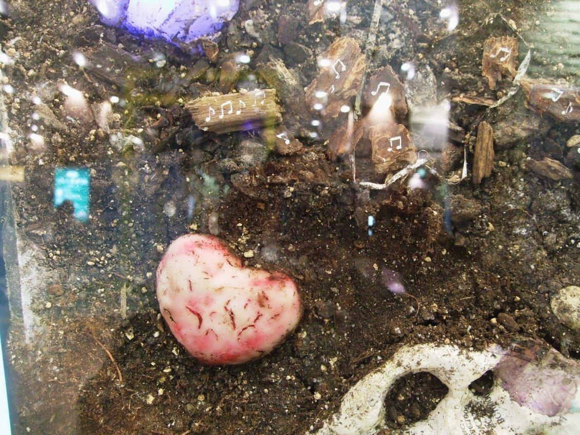 1263) JRタワーARTBOX 「[a stratum 地層とともに眠る記憶] Blakiston菅原英二」 2月1日(月)~4月29日(木)_f0126829_1513447.jpg