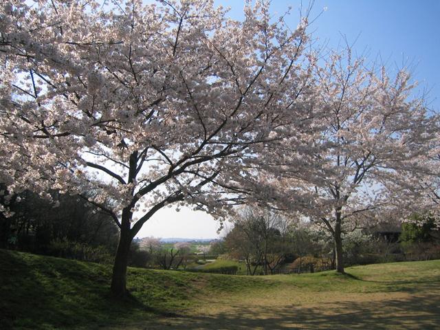 地元ランチと桜と荒川_a0034031_016127.jpg
