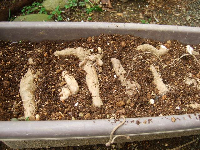 野菜の苗......少しずつ成長中!_b0137932_1915615.jpg